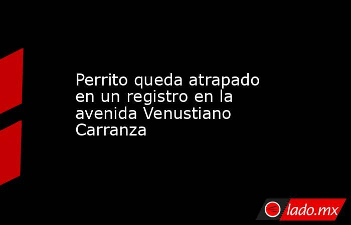 Perrito queda atrapado en un registro en la avenida Venustiano Carranza . Noticias en tiempo real