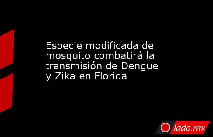 Especie modificada de mosquito combatirá la transmisión de Dengue y Zika en Florida. Noticias en tiempo real