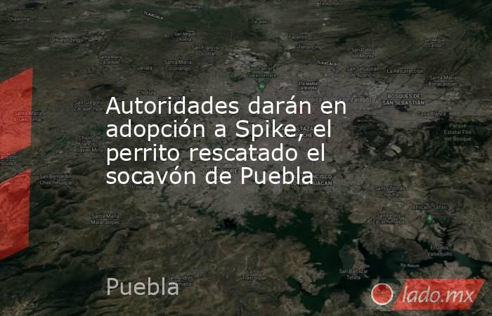 Autoridades darán en adopción a Spike, el perrito rescatado el socavón de Puebla. Noticias en tiempo real