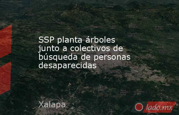 SSP planta árboles junto a colectivos de búsqueda de personas desaparecidas. Noticias en tiempo real