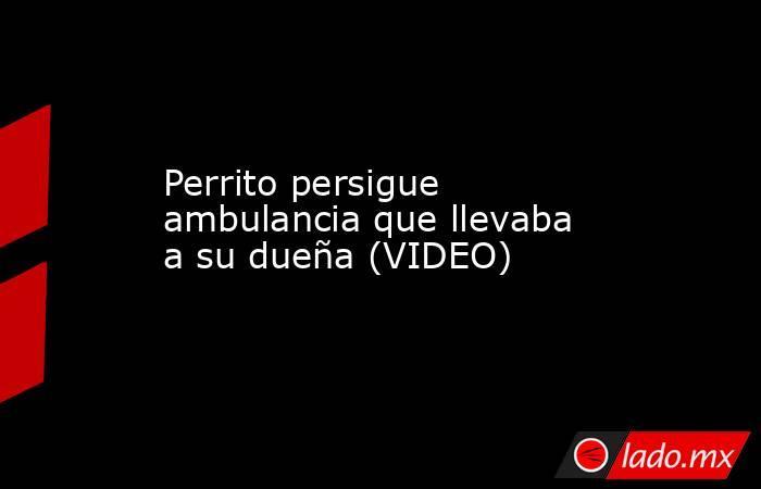 Perrito persigue ambulancia que llevaba a su dueña (VIDEO). Noticias en tiempo real