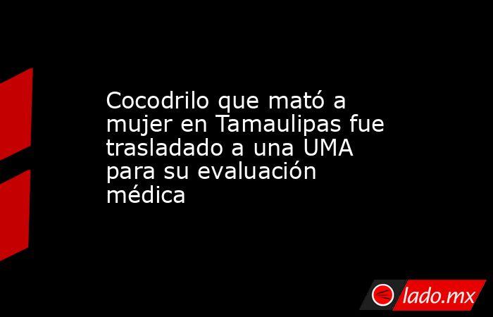 Cocodrilo que mató a mujer en Tamaulipas fue trasladado a una UMA para su evaluación médica. Noticias en tiempo real