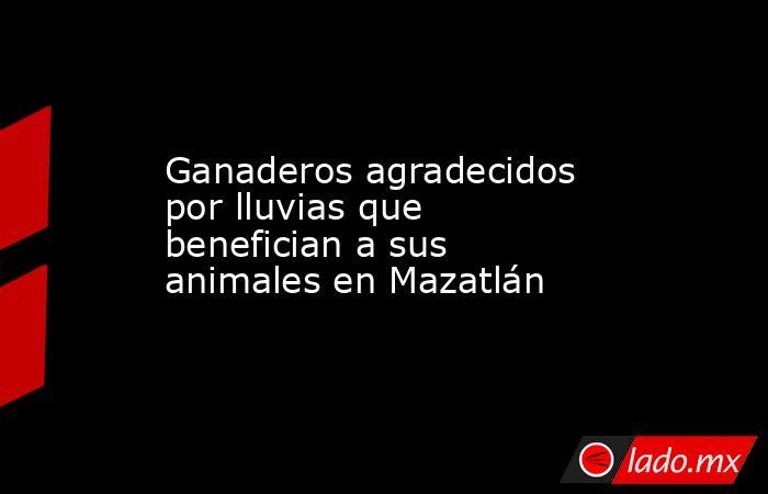 Ganaderos agradecidos por lluvias que benefician a sus animales en Mazatlán . Noticias en tiempo real