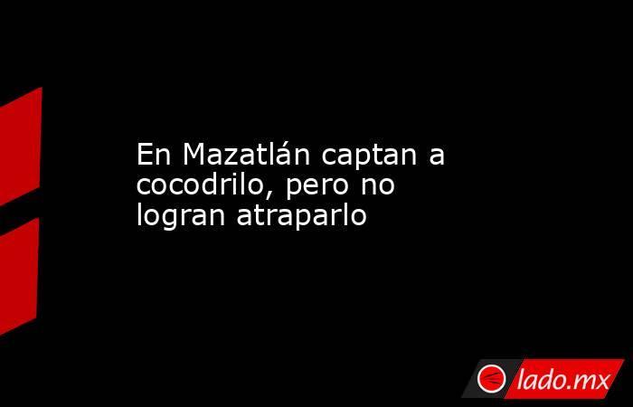En Mazatlán captan a cocodrilo, pero no logran atraparlo. Noticias en tiempo real