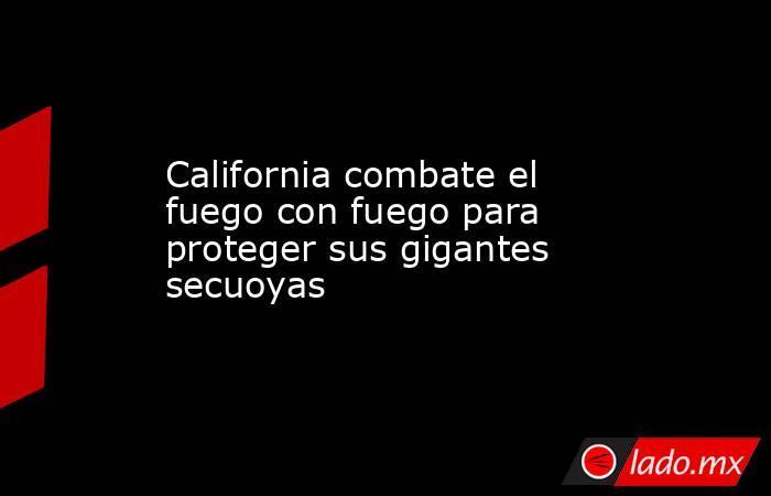 California combate el fuego con fuego para proteger sus gigantes secuoyas. Noticias en tiempo real