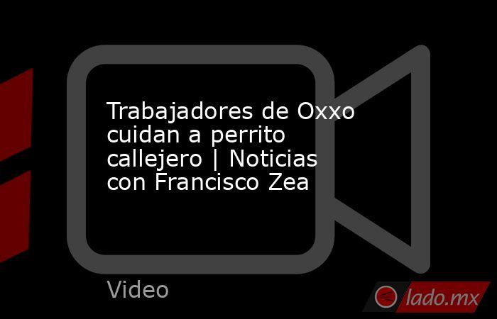 Trabajadores de Oxxo cuidan a perrito callejero   Noticias con Francisco Zea. Noticias en tiempo real