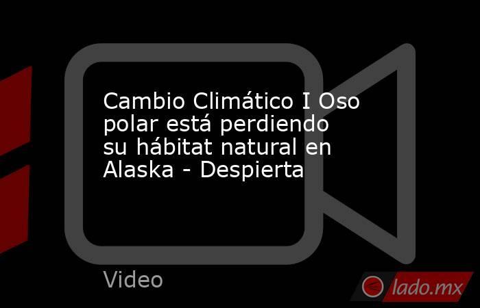 Cambio Climático I Oso polar está perdiendo su hábitat natural en Alaska - Despierta. Noticias en tiempo real