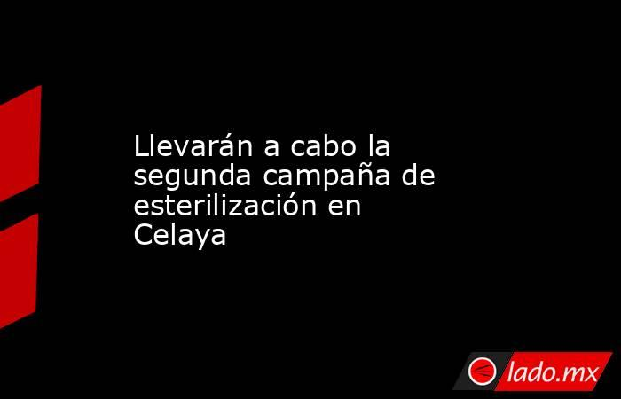 Llevarán a cabo la segunda campaña de esterilización en Celaya. Noticias en tiempo real