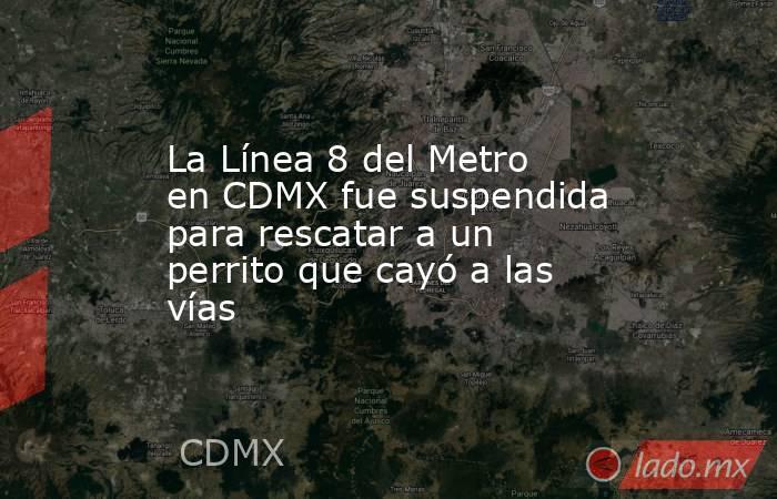 La Línea 8 del Metro en CDMX fue suspendida para rescatar a un perrito que cayó a las vías. Noticias en tiempo real