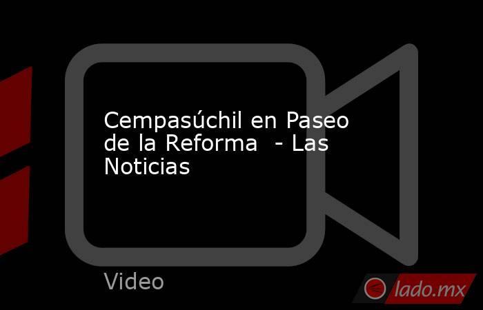 Cempasúchil en Paseo de la Reforma  - Las Noticias. Noticias en tiempo real