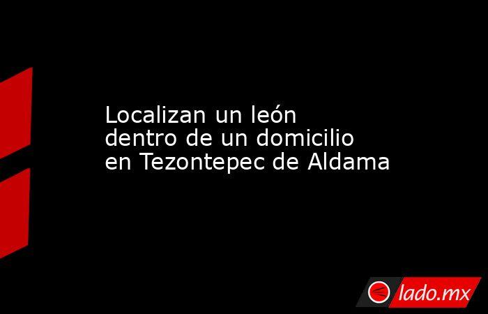 Localizan un león dentro de un domicilio en Tezontepec de Aldama. Noticias en tiempo real